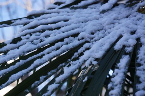 消え残る雪