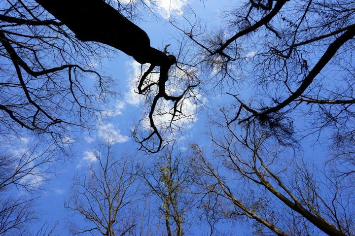 雑木林の木々は葉を落とし